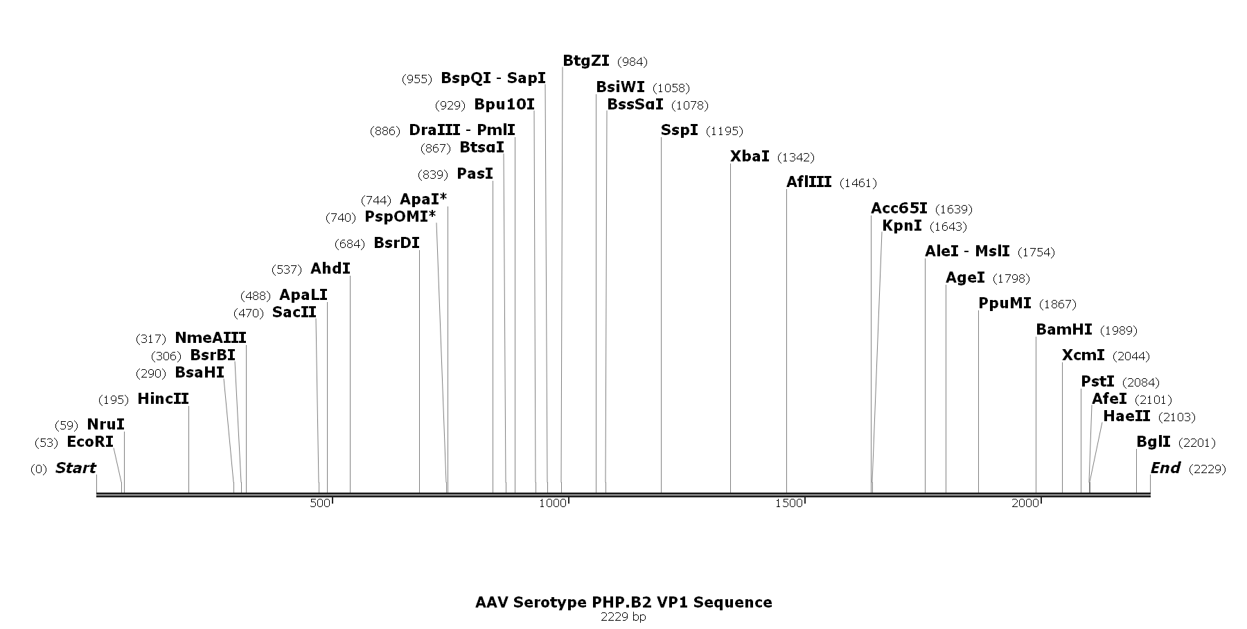 AAV Serotype PHP.B2 VP1 Sequence