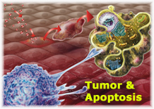 Tumor and Apoptosis