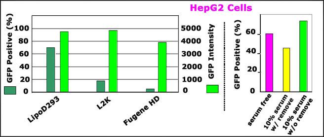 LipoD203_vs_Lipo2000_HepG2